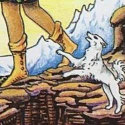 0愚者 白い犬